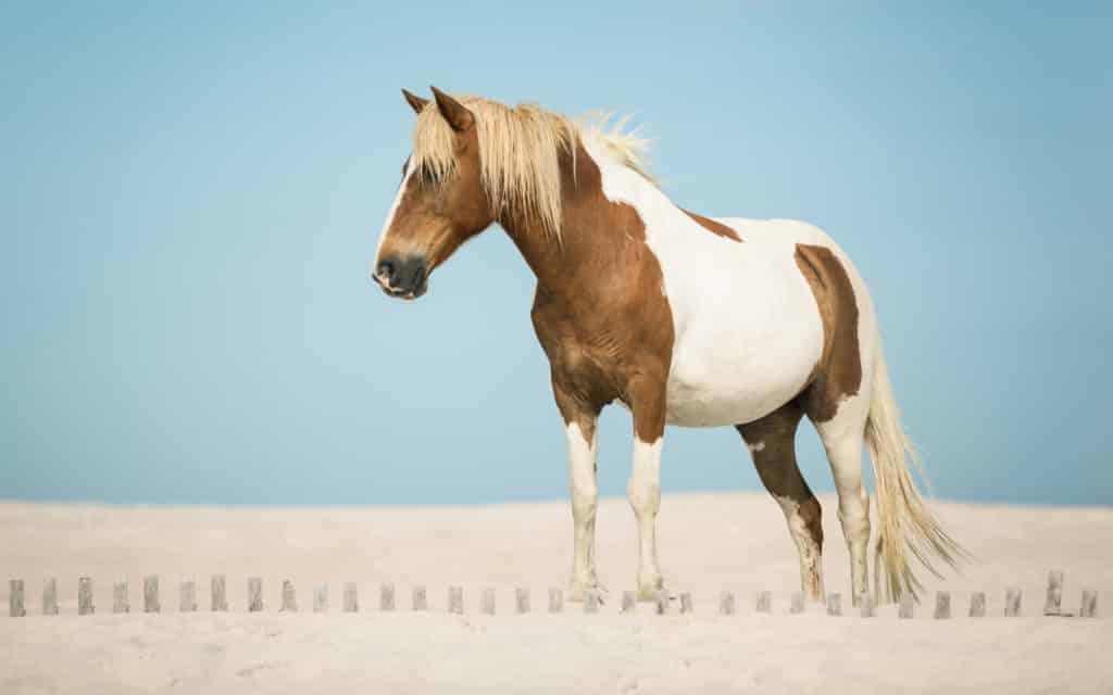 تنزيل صور أجمل خيول