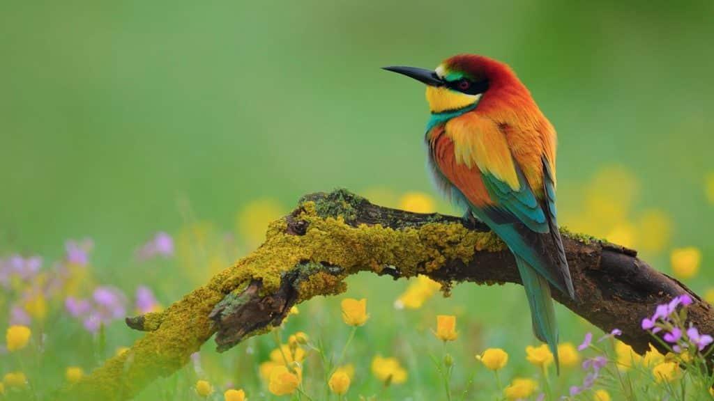 صور طيور جميلة بألوان غريبة روعة