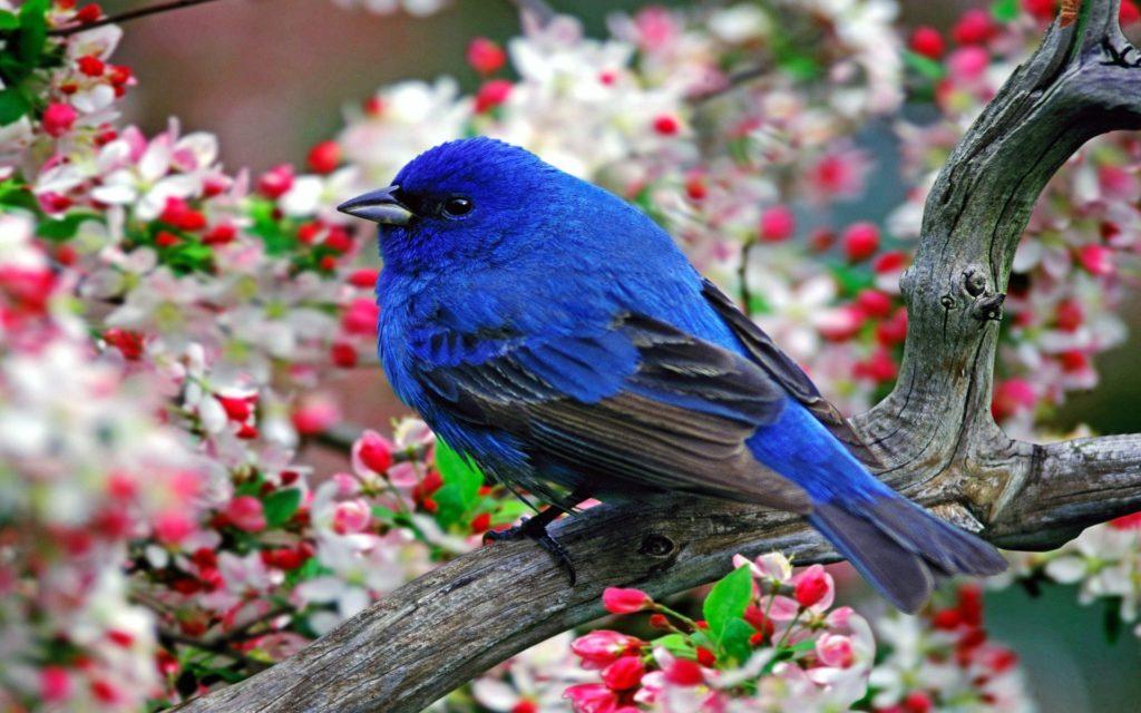 صور طيور بألوان غريبة جديدة
