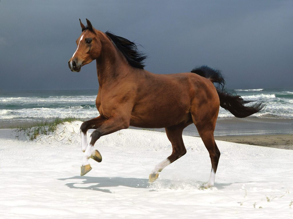 أحلي صور خيول للفيس بوك وأروع صور خيول للأنستقرام