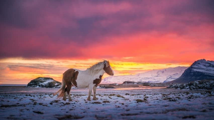 صور حلوين أجمل خيول