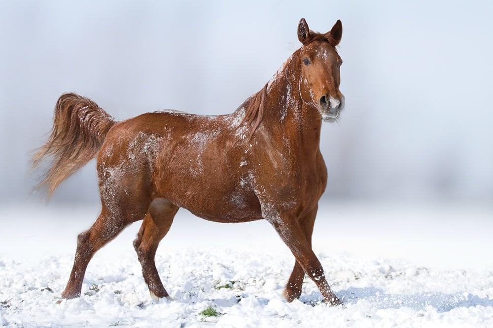 صور رائعة أجمل خيول