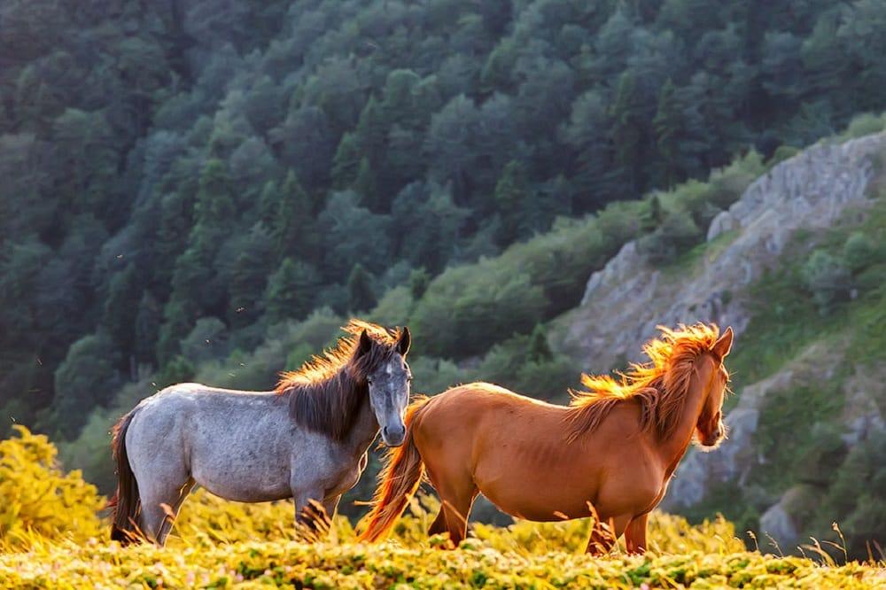 صور خيول روعة 2017