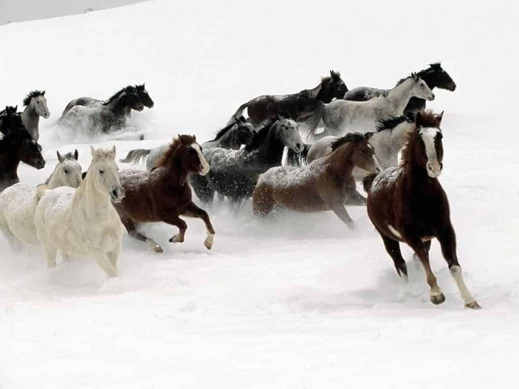 صور خيول تجنن