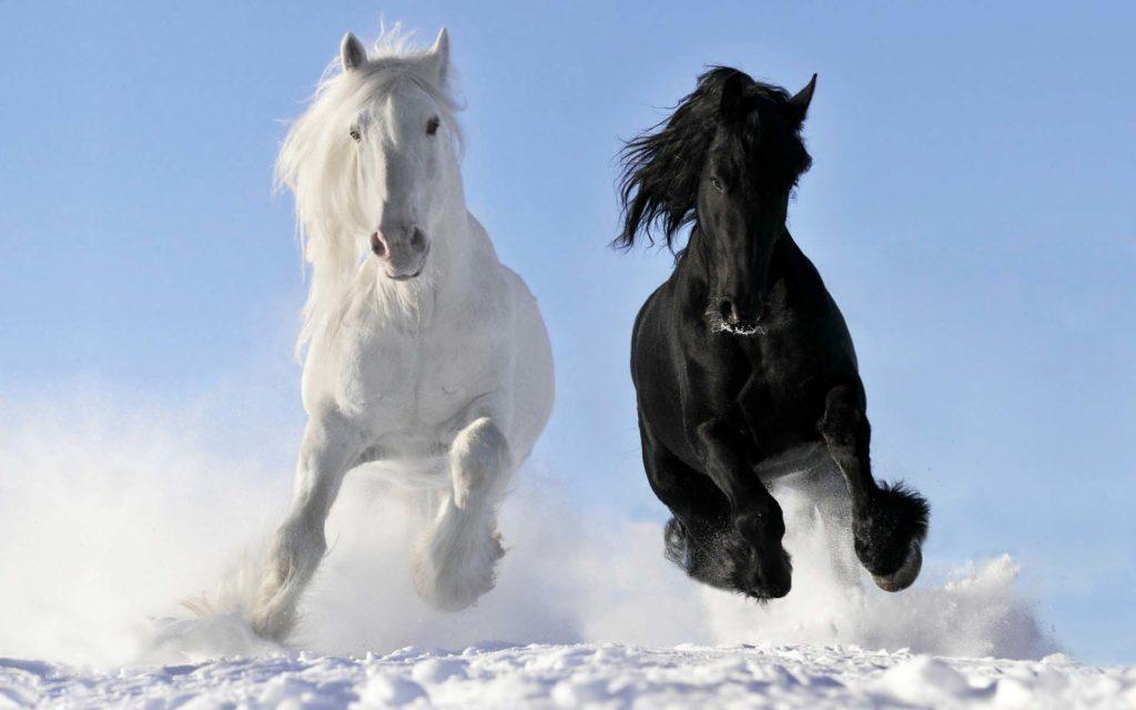 صور خيول جامدة