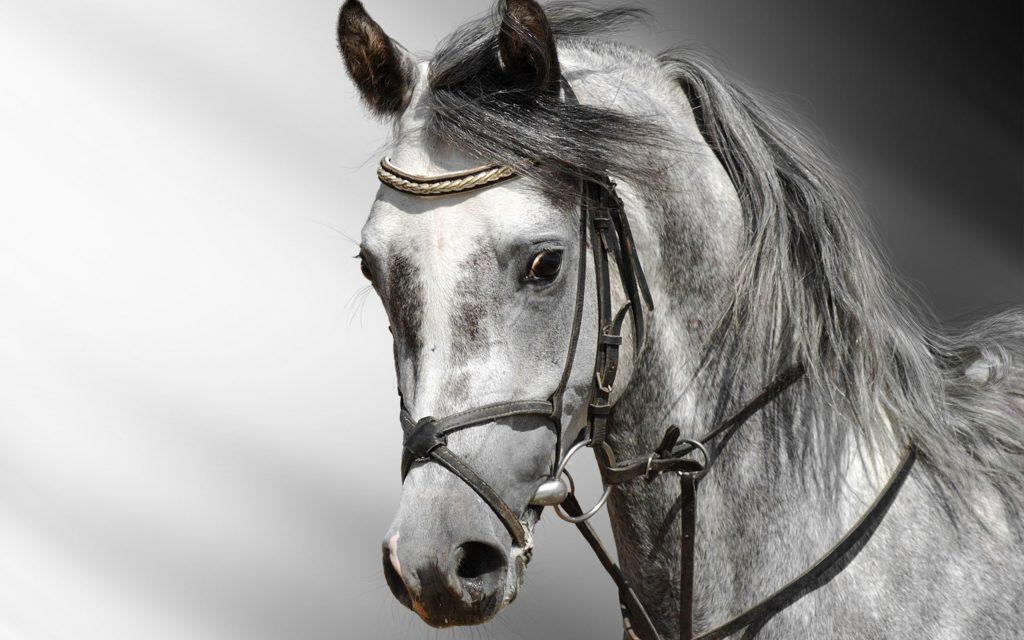 صور خيول جميلة جدا