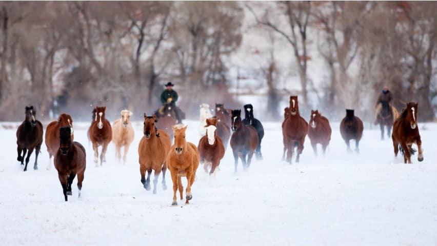 صور خيول خقق