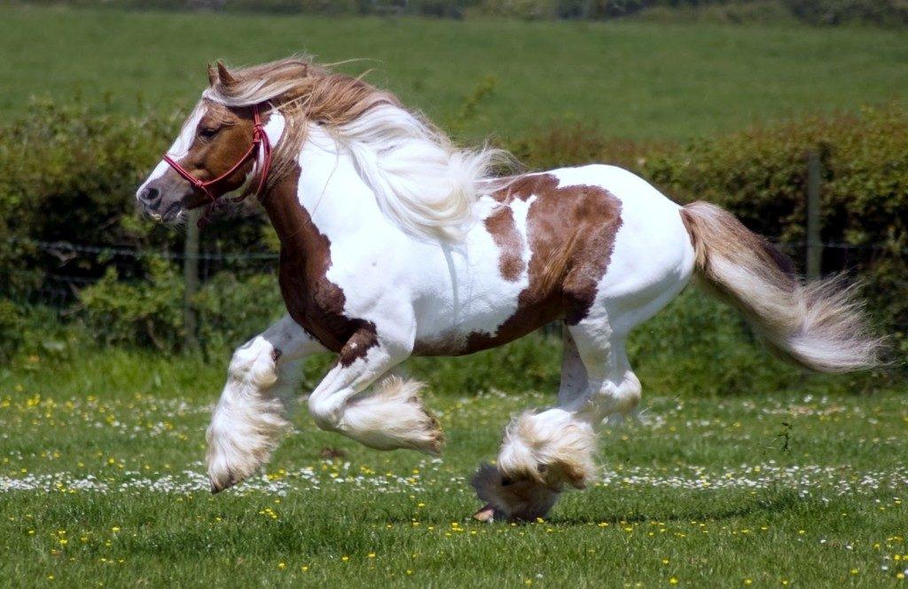 صور خيول حلوين