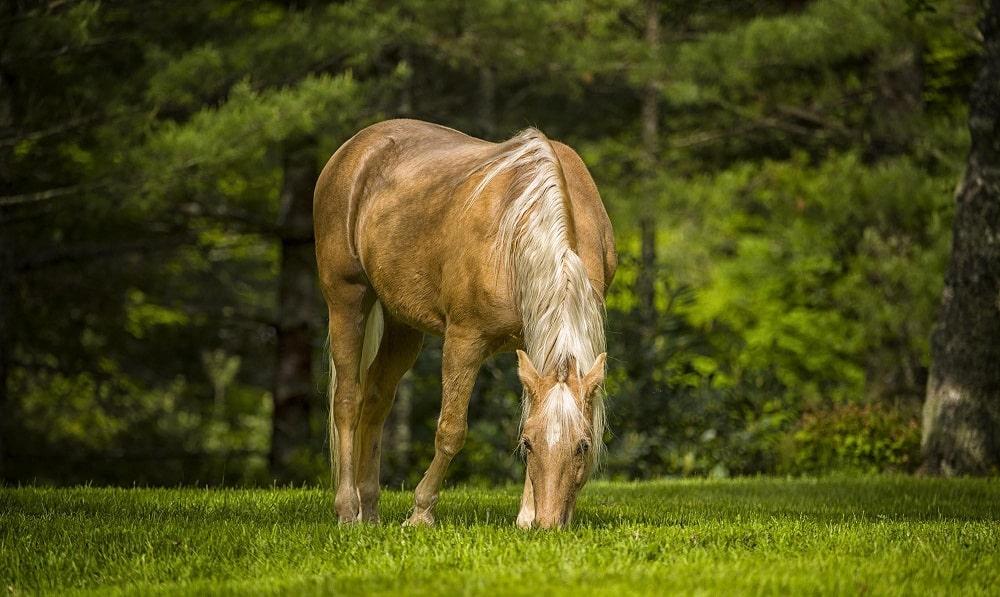 احلى صور خيول