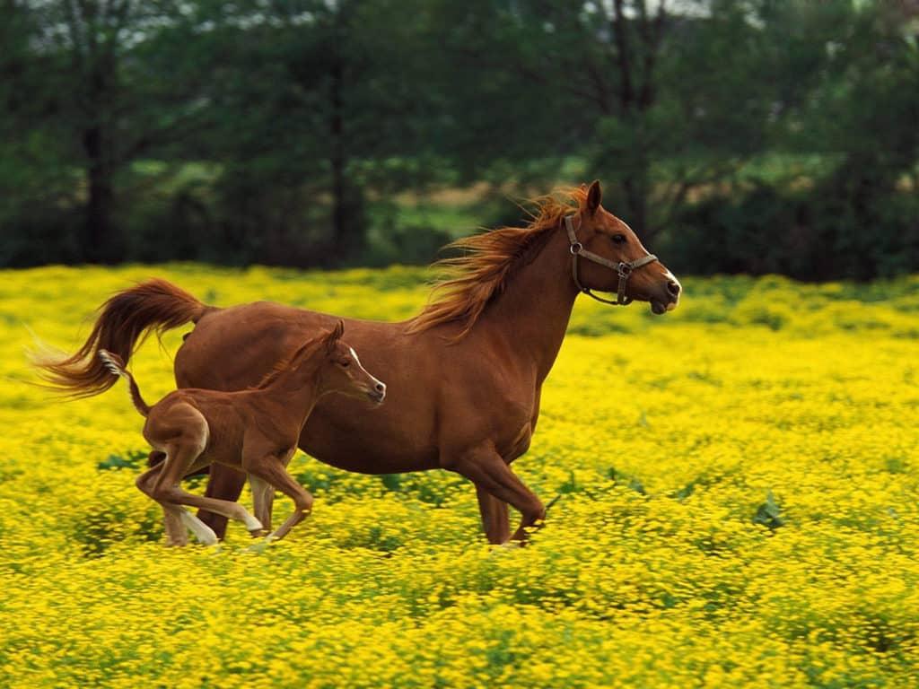 صور خيول رائعة