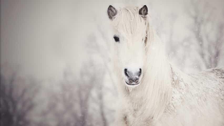 صور خيول للأنستقرام