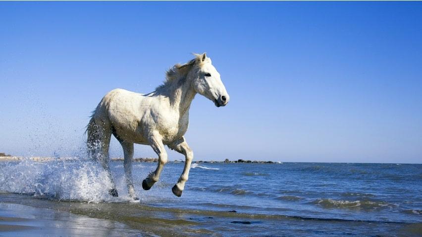 صور خيول للفيس بوك