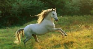 أجمل صور خيول منوعة جميلة جداً