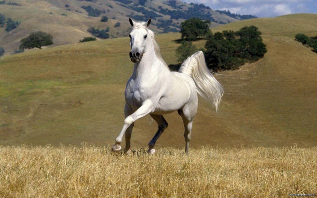 تحميل صور خيول