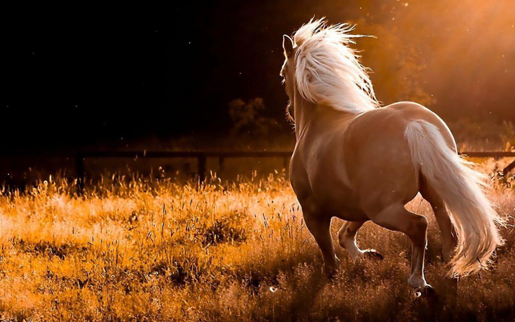صور خيول جميله