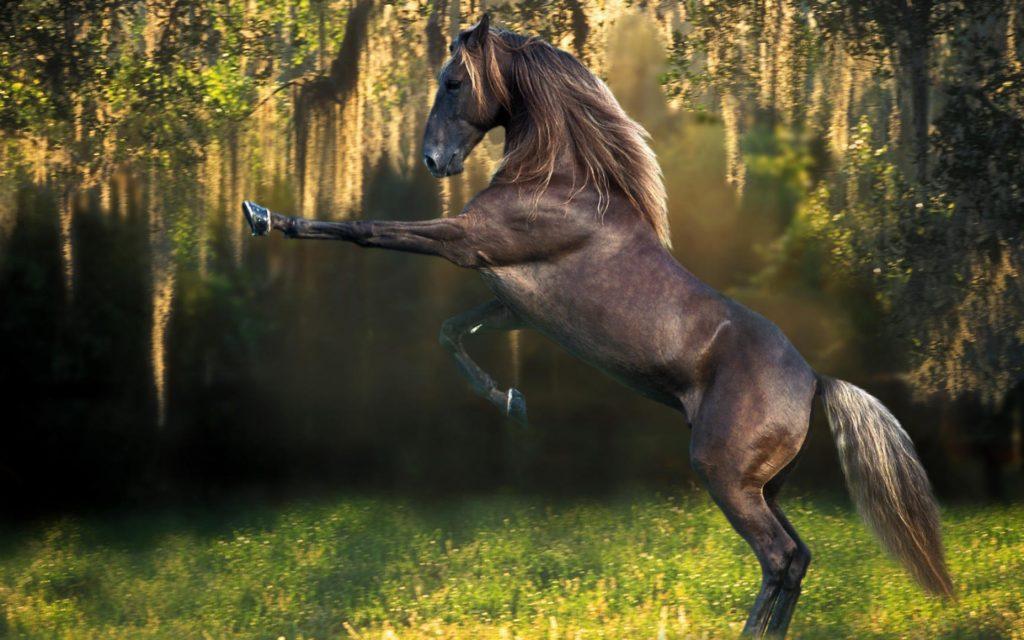 صور خيول حلوة
