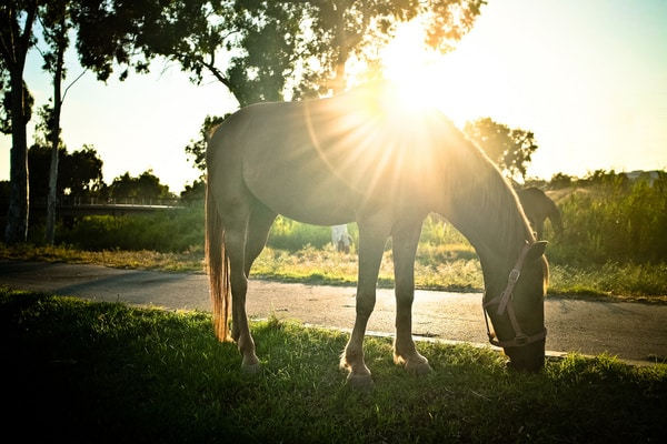 صور أجمل خيول كشخه