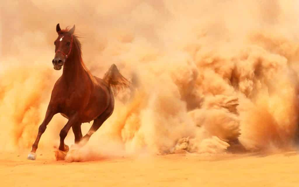 صور أجمل خيول خقق