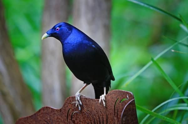 صور طيور بألوان غريبة 2017 كشخه