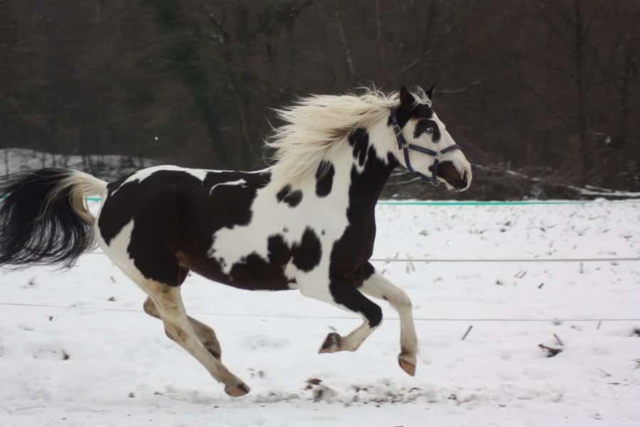 صور أجمل خيول حلوين