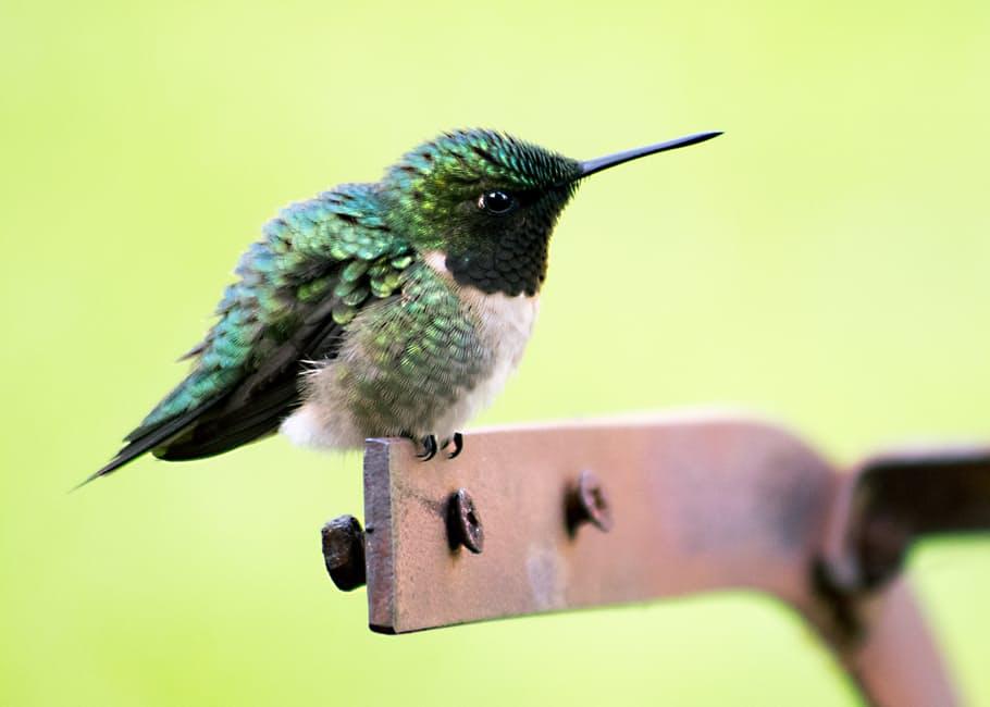 صور طيور بألوان غريبة 2017 منوعة