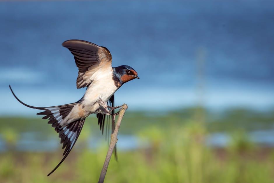 صور طيور بألوان غريبة تجنن