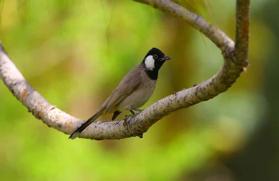 صور طيور بألوان غريبة جامدة