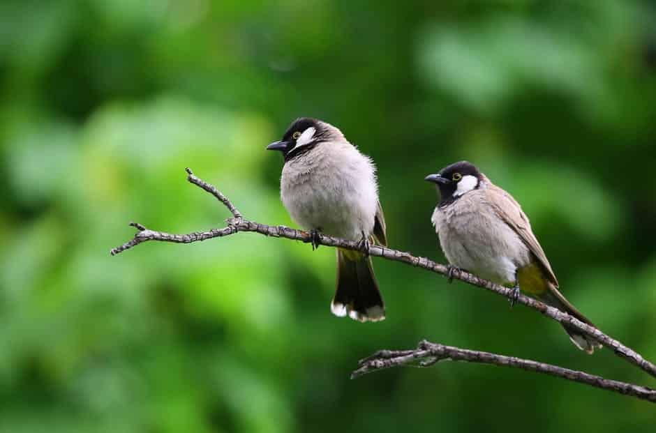 صور طيور بألوان غريبة جميلة جدا