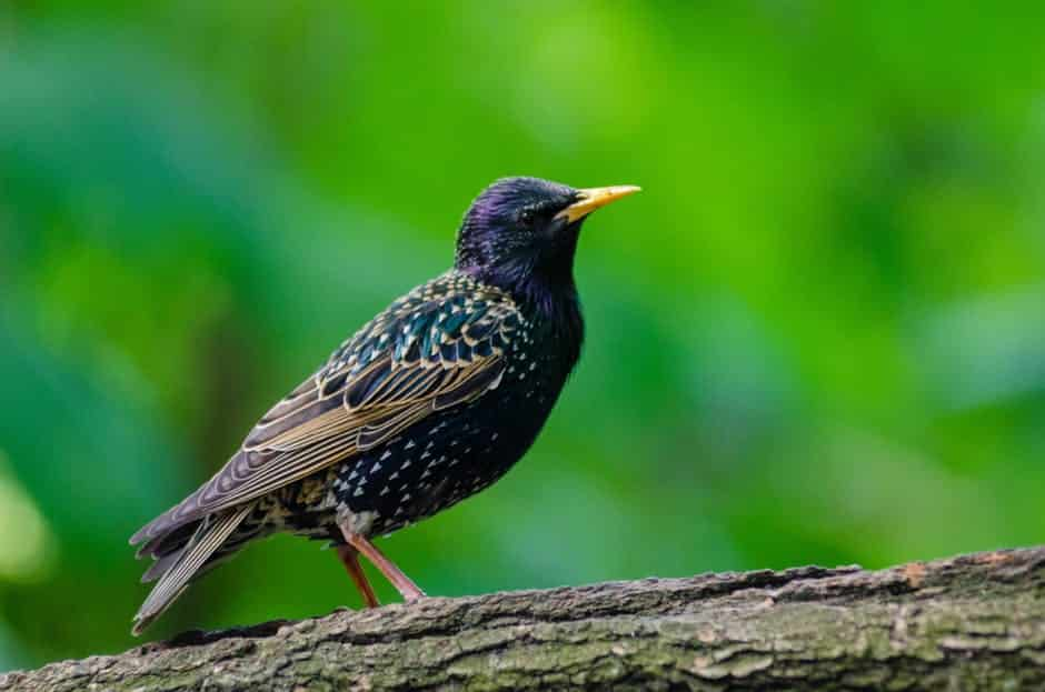 صور طيور بألوان غريبة كشخه