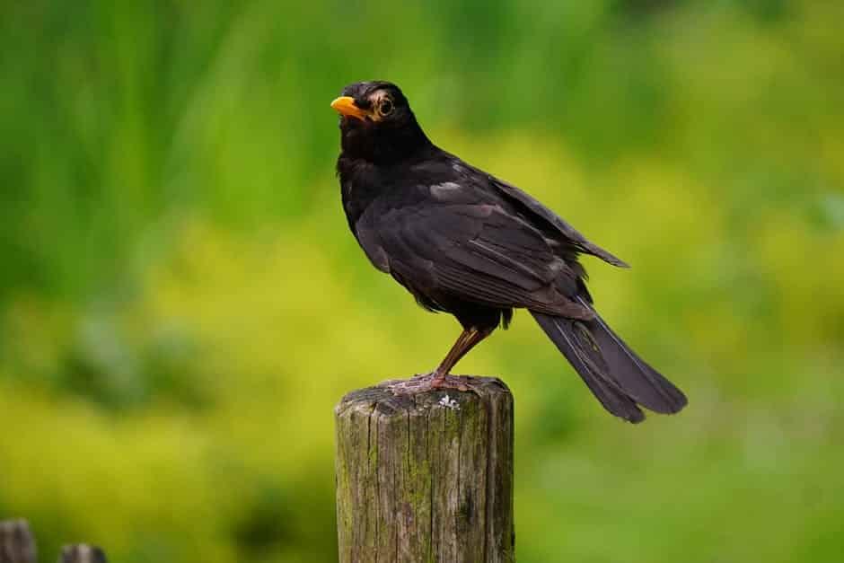 احلى صور طيور بألوان غريبة