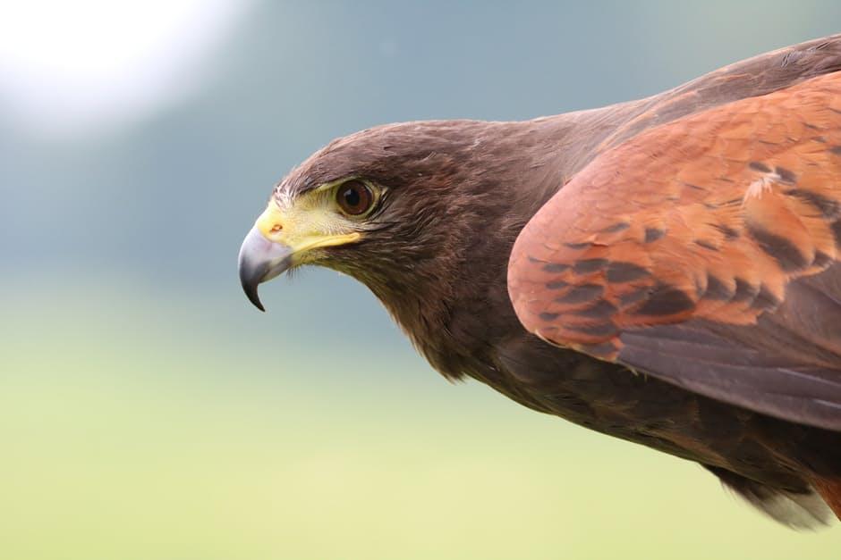 صور طيور بألوان غريبة منوعة