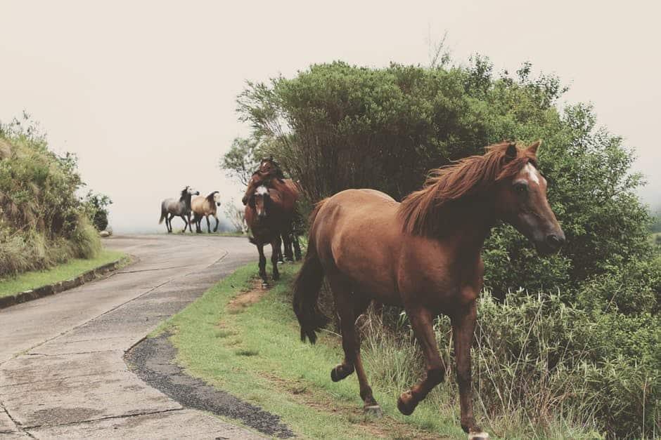 صور أجمل خيول جديدة