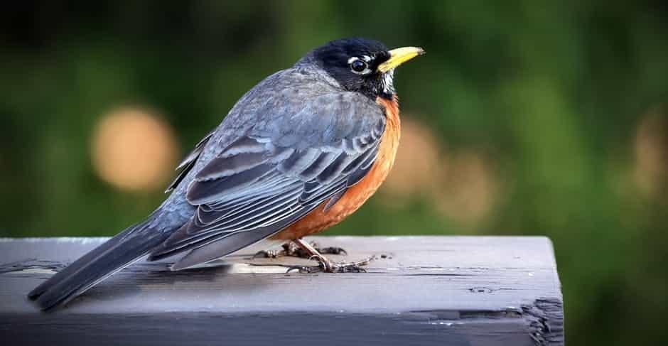 صور طيور بألوان غريبة حلوة