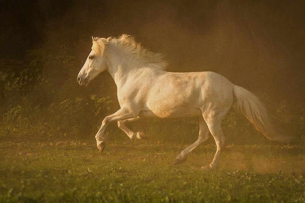 صور أجمل خيول روعة