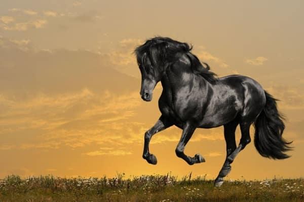 صور أجمل خيول منوعة