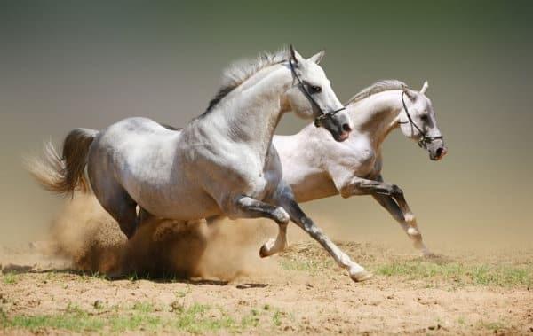 صور أجمل خيول حلوة