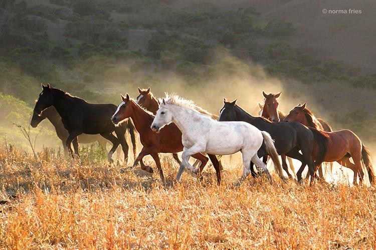 صور خيول تجنن 2017