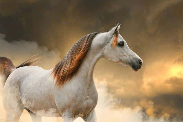 صور خقق أجمل خيول