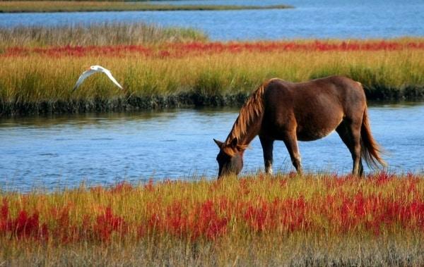 احلى صور أجمل خيول