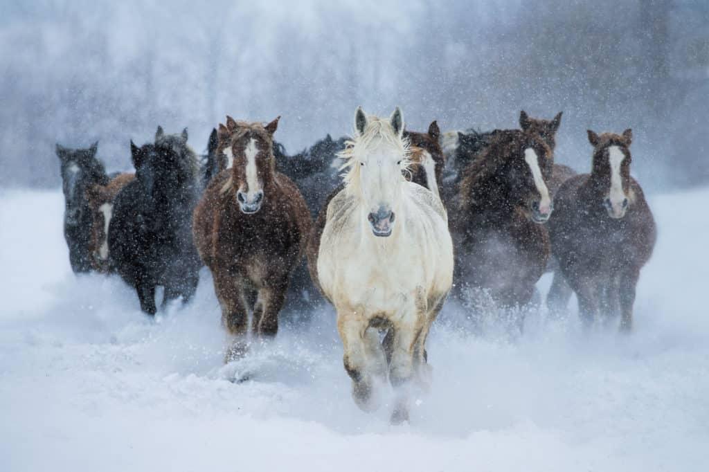صور روعة أجمل خيول