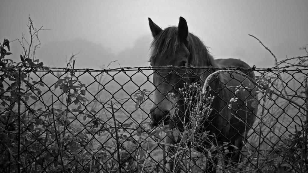 تحميل صور أجمل خيول