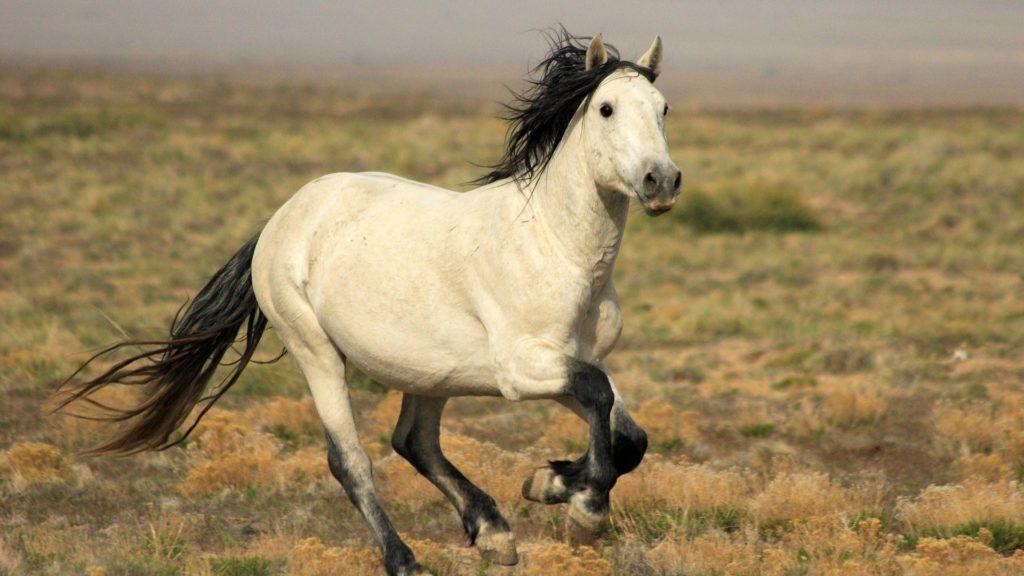 صور جديدة أجمل خيول