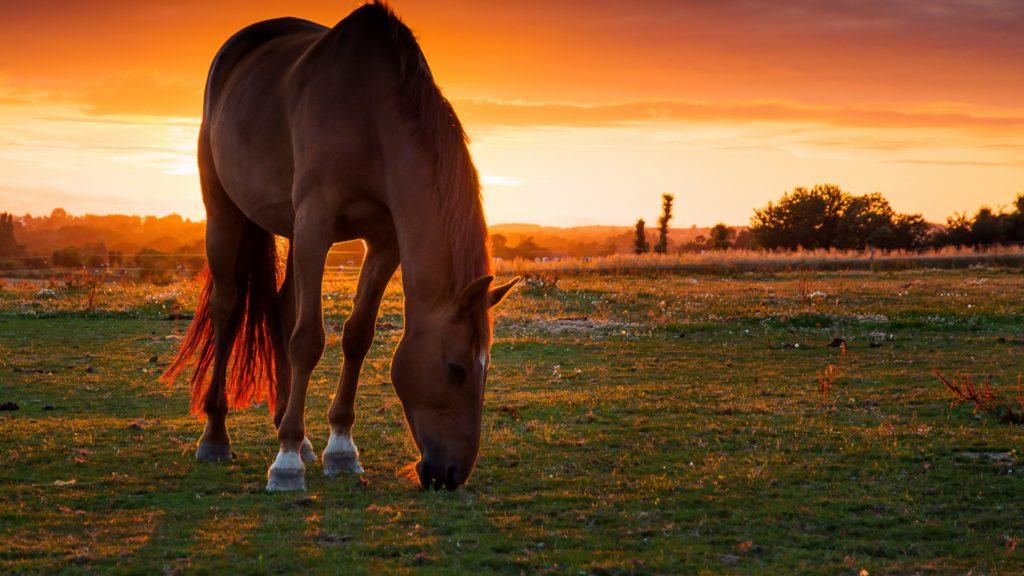 صور للفيس بوك أجمل خيول
