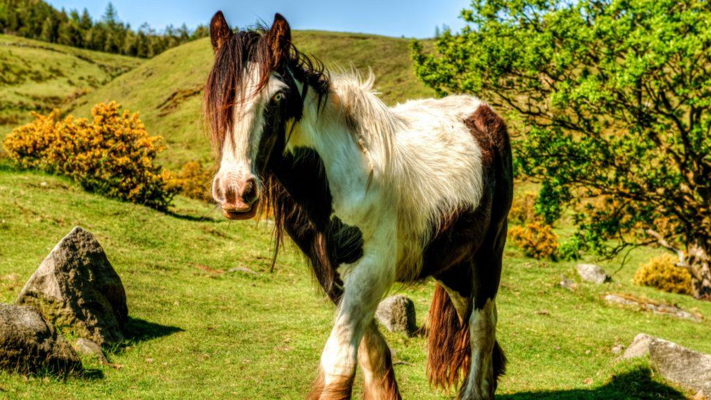 صور منوعة أجمل خيول