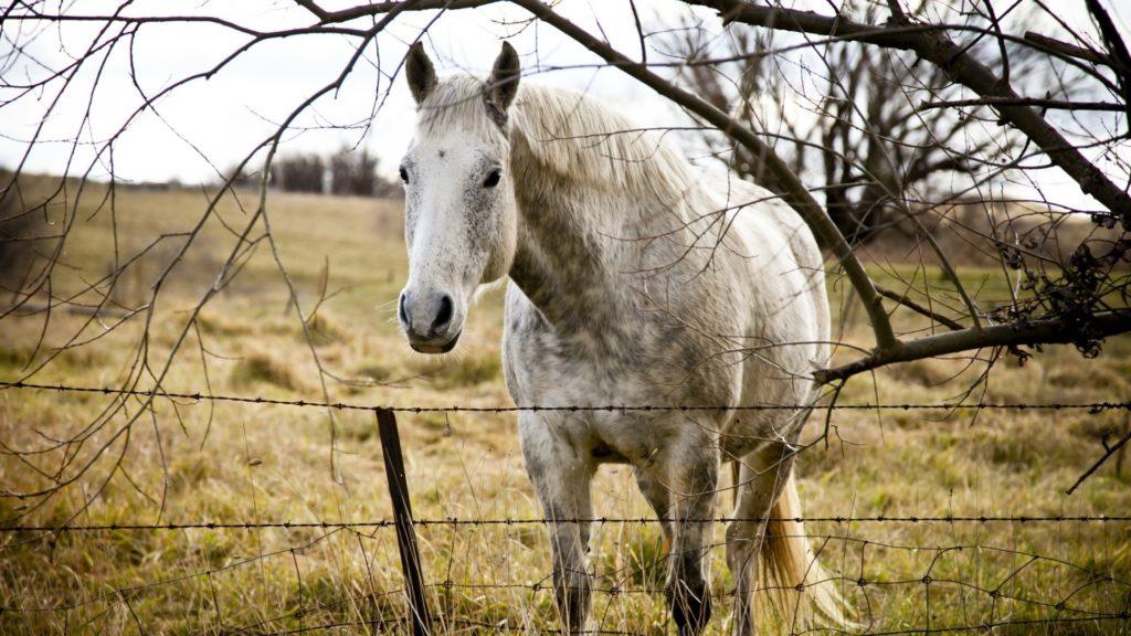 صور حلوة أجمل خيول