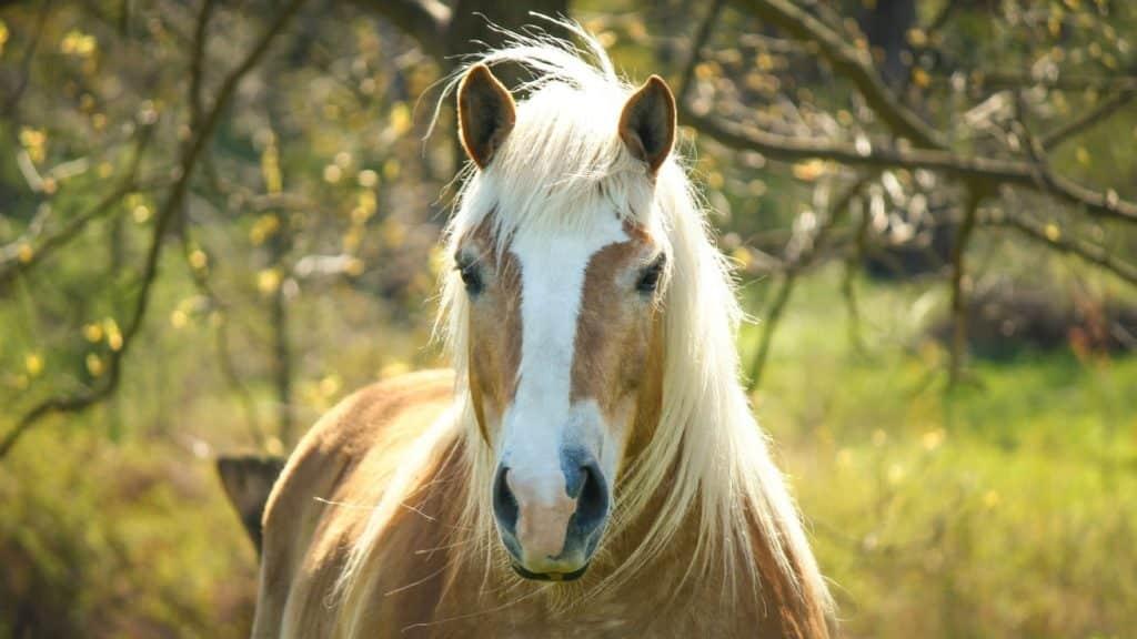 صور جميلة أجمل خيول