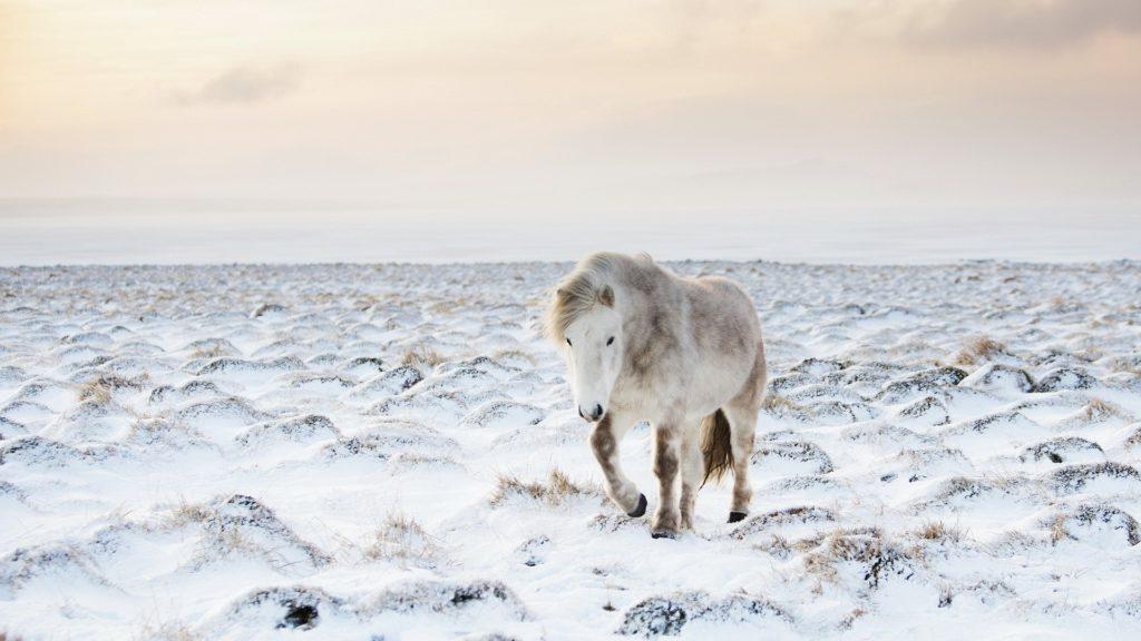 صور أجمل خيول تجنن