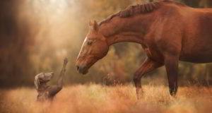 صور خيول حلوه متعددة الألوان عالية الجودة