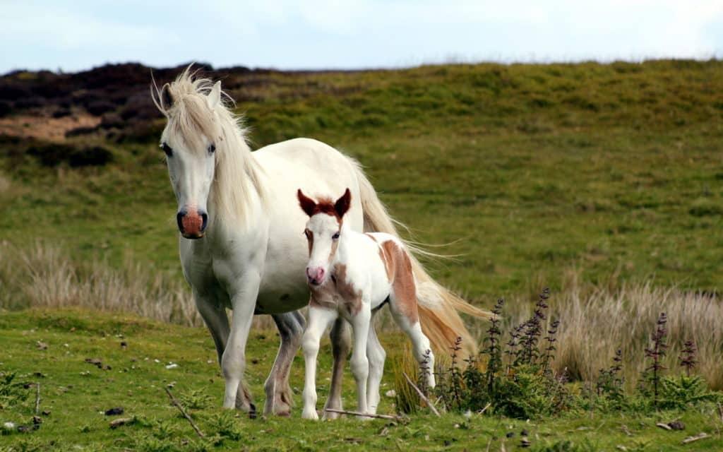 صور خيول للأنستقرام 2017
