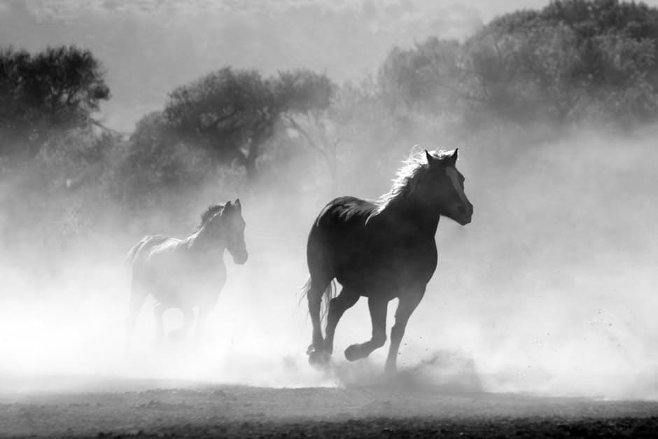 صور خيول منوعة 2017